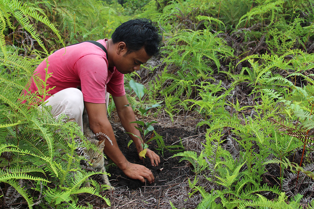ReforestationIndo.jpg