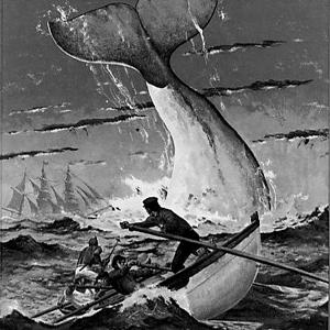Illustration of Moby Dick
