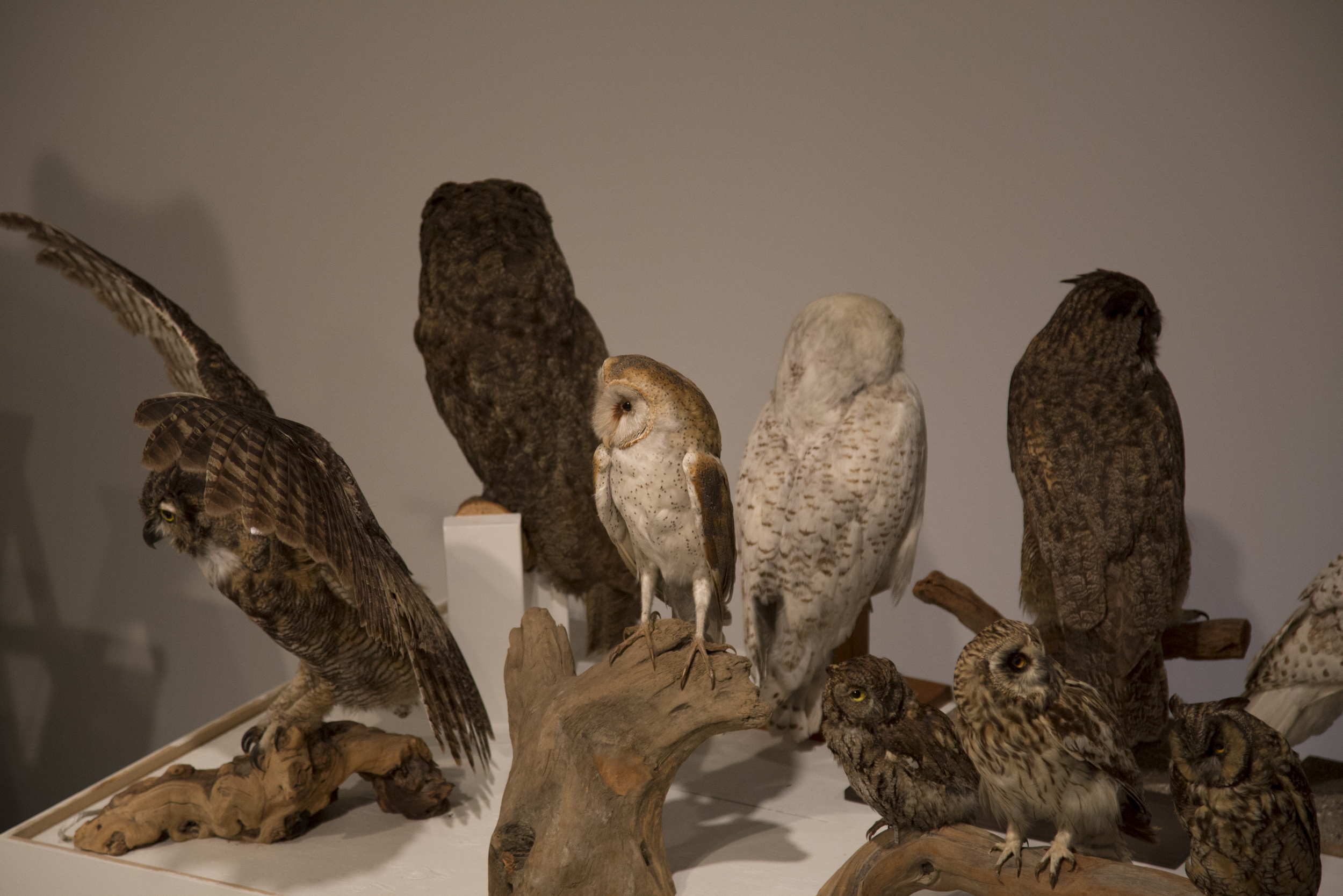 851px version of owls.jpg