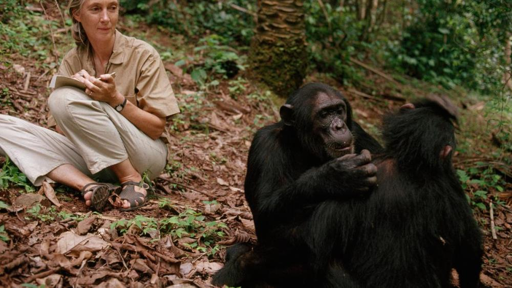960px version of Young-Jane-Goodall.jpg