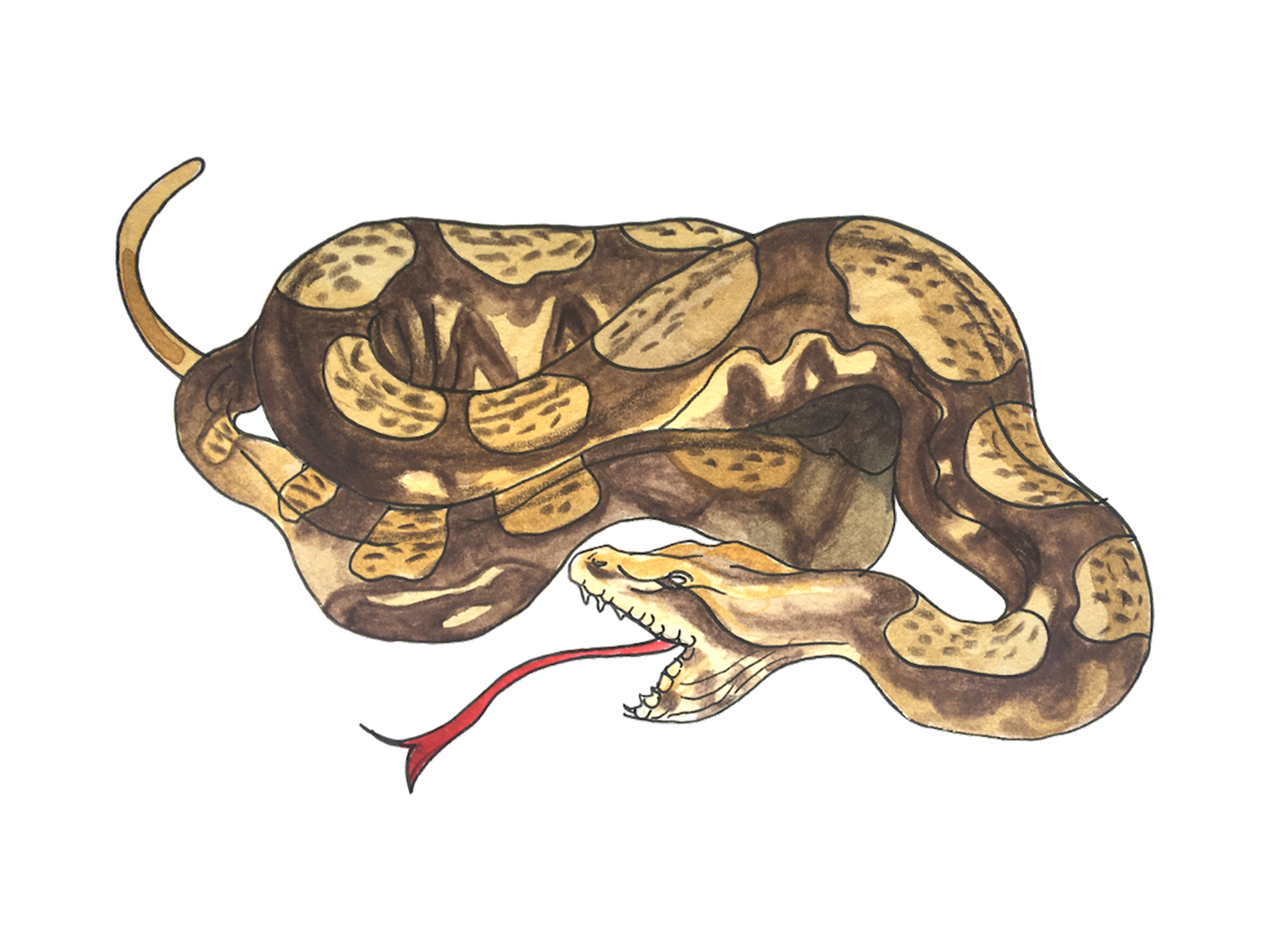 Snake-Sloth-Cover.jpg