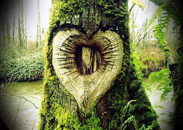 Heart Shaped Knot in tree