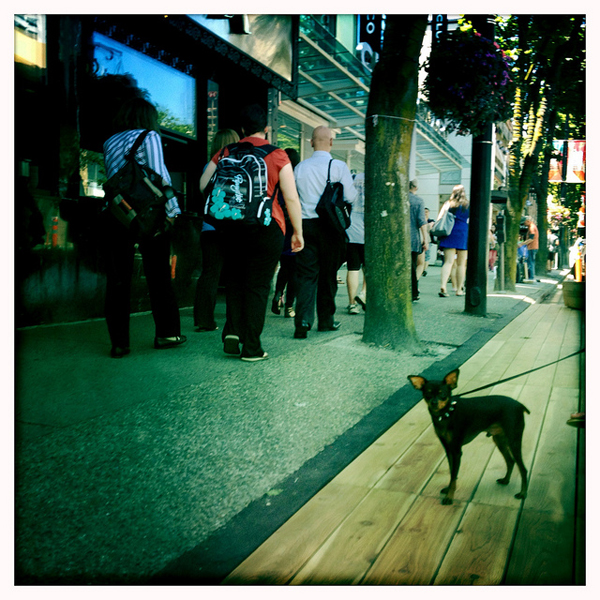 Streetwise-looking dog