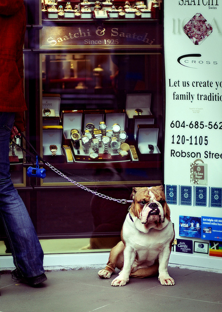 Watchdog protecting jewelry store