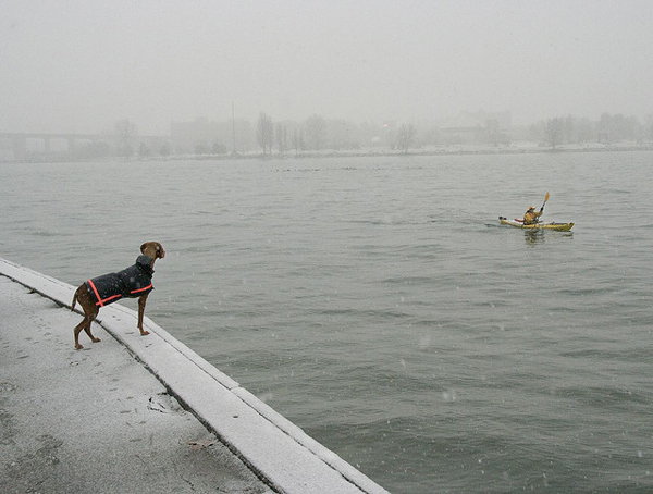 Dog waiting for owner in kayak