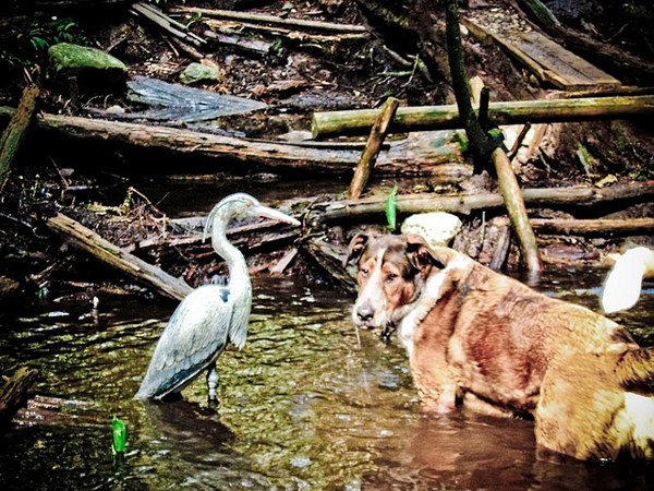Hank the dog with friend, the heron
