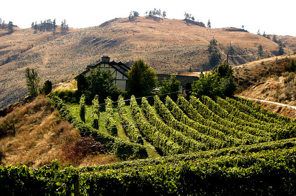 Okanagan vineyard in the fall