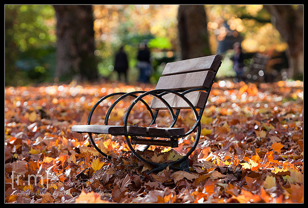 Bench in Stanley Park