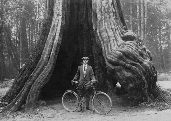 582px version of Stanley Park hollow tree