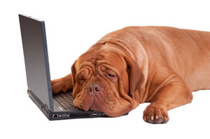 Watchdog lying on a laptop