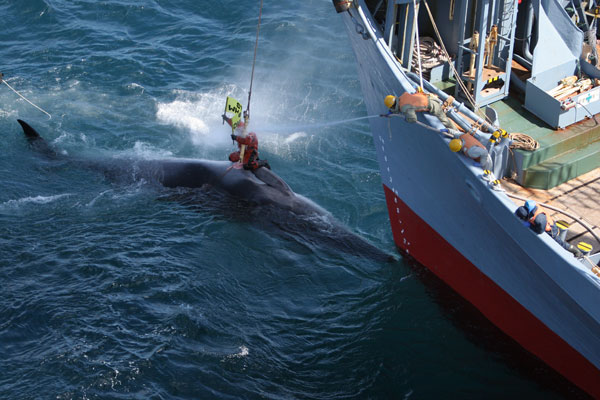 Greenpeace confronts Japanese Whaling Boat