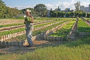 cuban-urban-farm.jpg