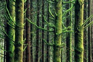 moss-on-trees.jpg