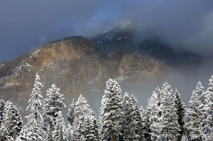 snowy-trees.jpg