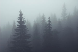 foggy-trees.jpg