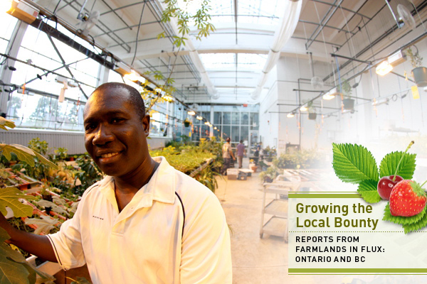 Greenhouse coordinator at The Stop