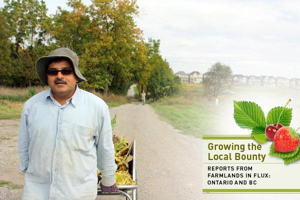 McVean farmer in Brampton, Ontario