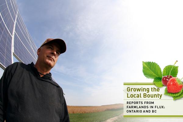 Solar farmer Dave Ferguson