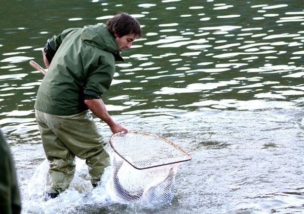 Tim Clark nets a Harrison River sockeye