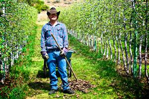 A farmer in fields