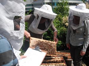 Urban beekeepers