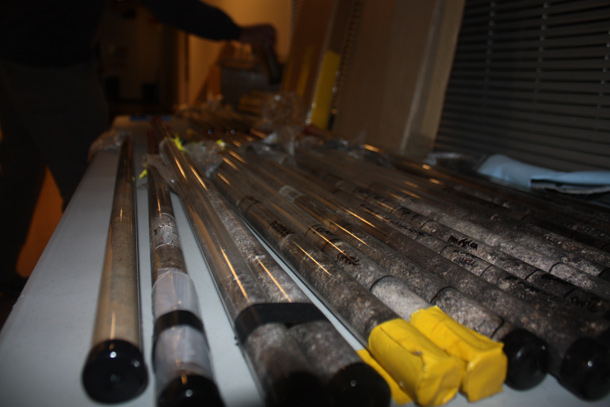 Herring core samples