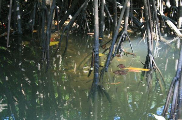 Mangrove roots, eelgrass
