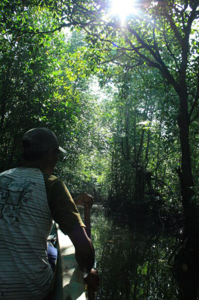 Mangrove tour, eelgrass, Indonesia
