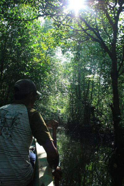 Mangrove tour, eelgrass, Indonesia