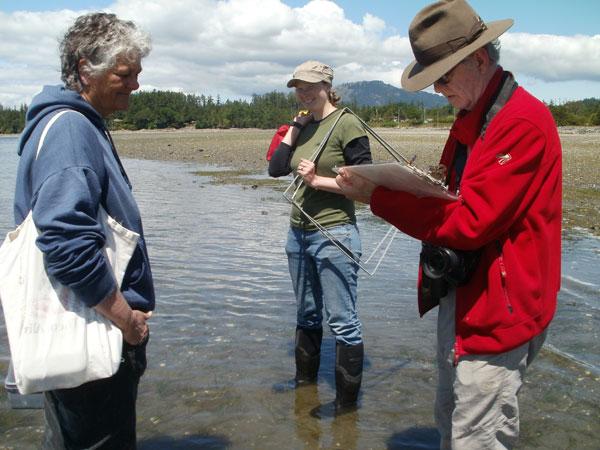 Nikki Wright, eelgrass, Dr. Colin Campbell, Pat Bay, British Columbia