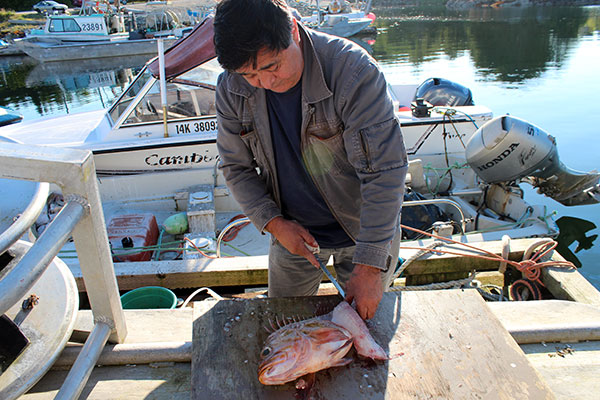 Heiltsuk Hereditary Chief Harvey Humchitt cleans a rock cod