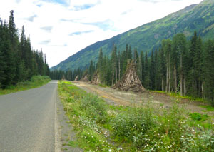 Cassiar Highway with Northwest Transmission Line right of way