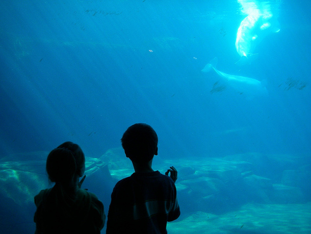Aquarium Makes Good On Free Passes For Low Income Visitors The Tyee