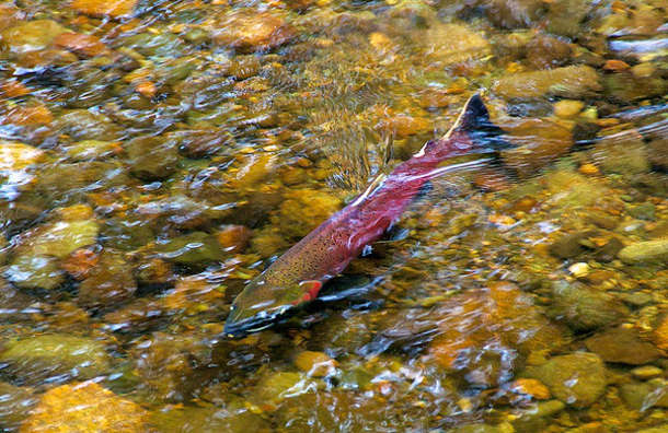 Ottawa should take back pattison group 39 s fishing licenses for Canadian fishing license bc