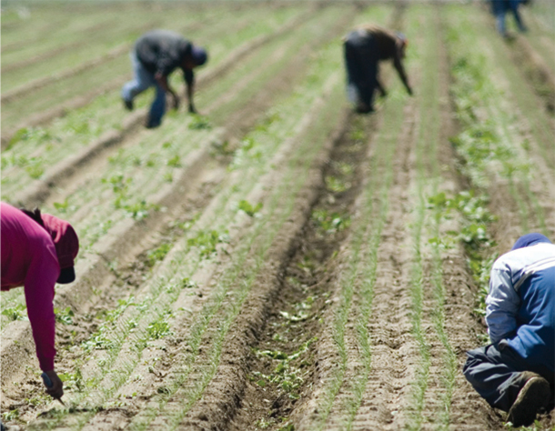 Seasonal Farmworkers In Bc Face Health Care Apartheid Researcher The Tyee