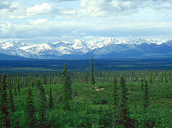 582px version of Boreal-Forest-Mountain.jpg