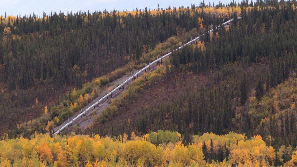 960px version of Pipeline-BC-Trees.jpg