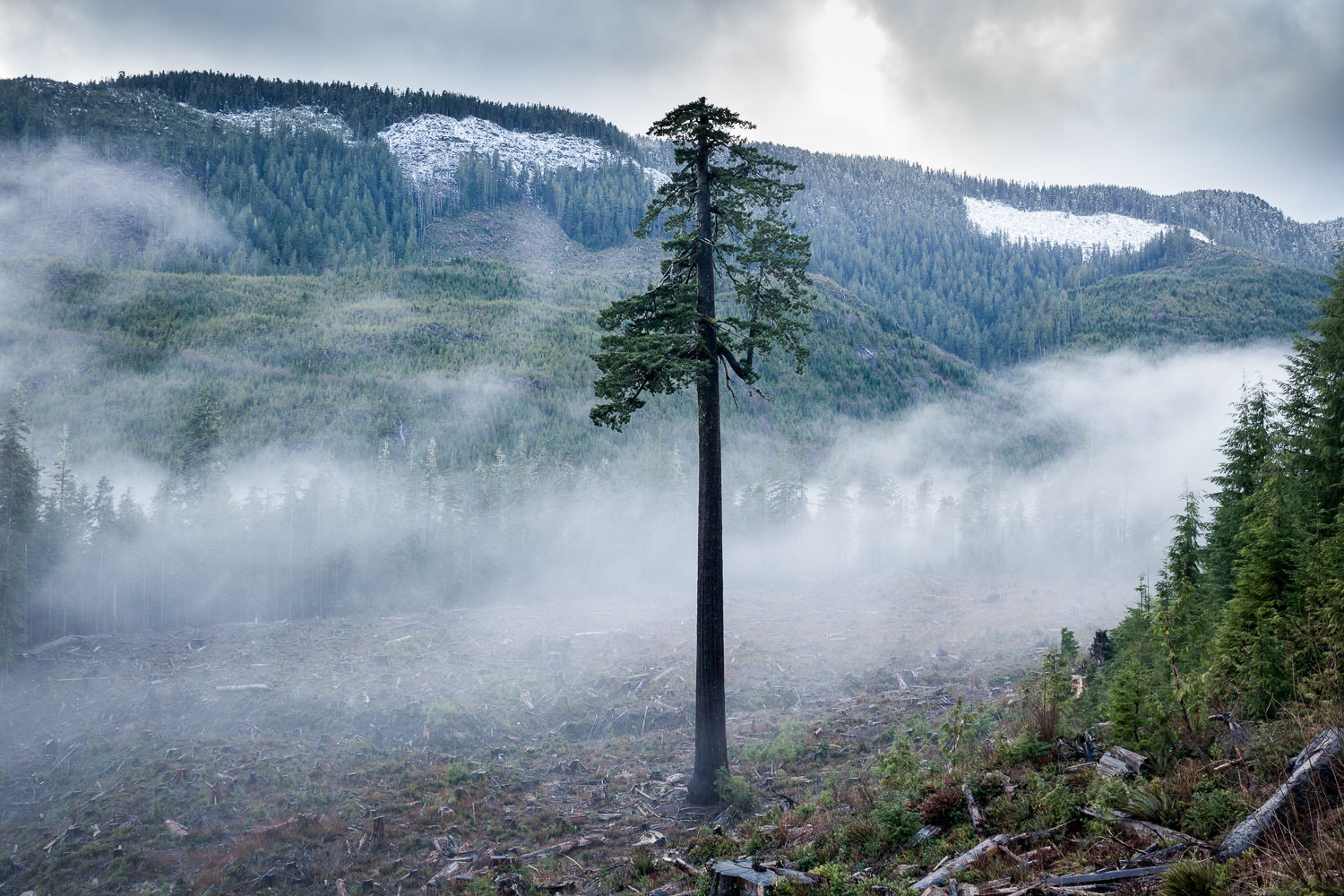 COVER-big-lonely-doug-port-renfrew-fog.jpg