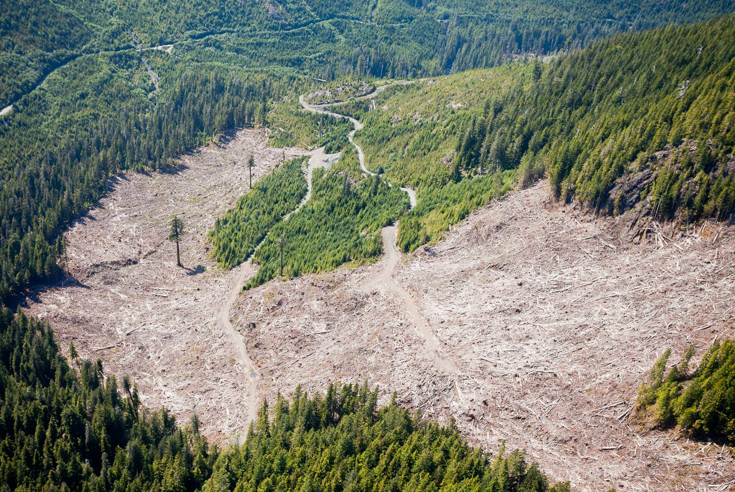 1200px version of PHOTO1.big-lonely-doug-clearcut-aerial.jpg