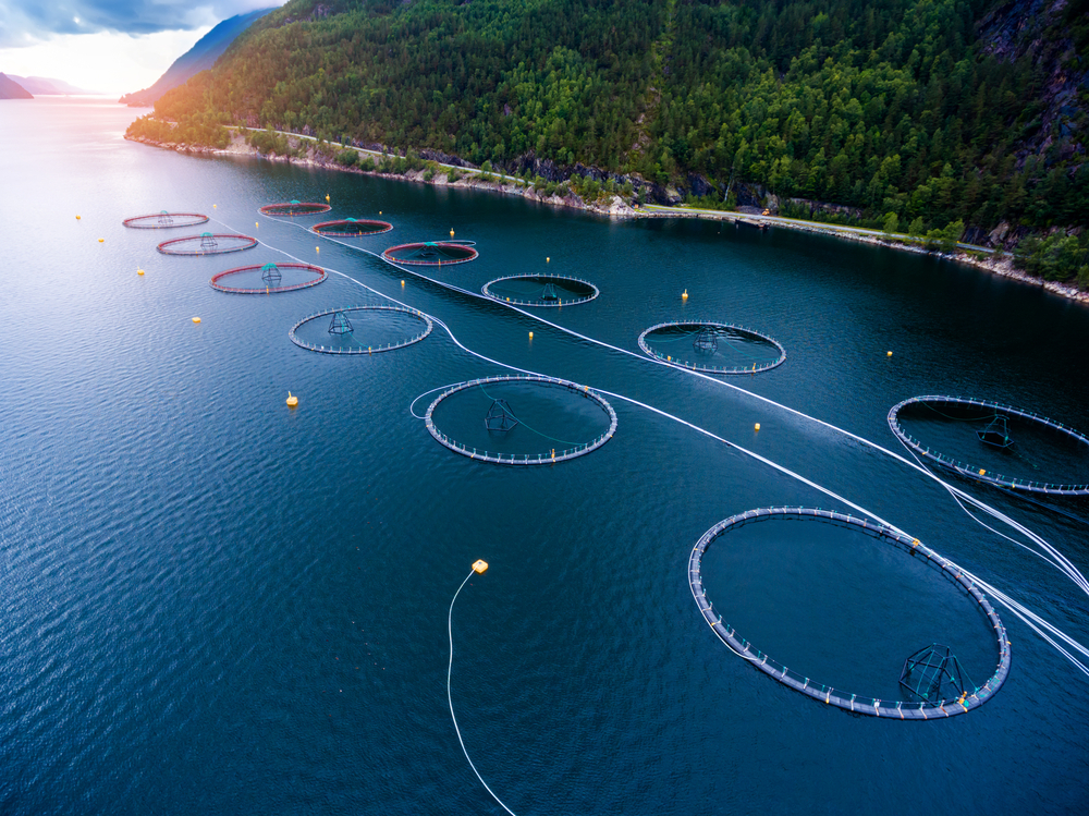 Fish farm norway