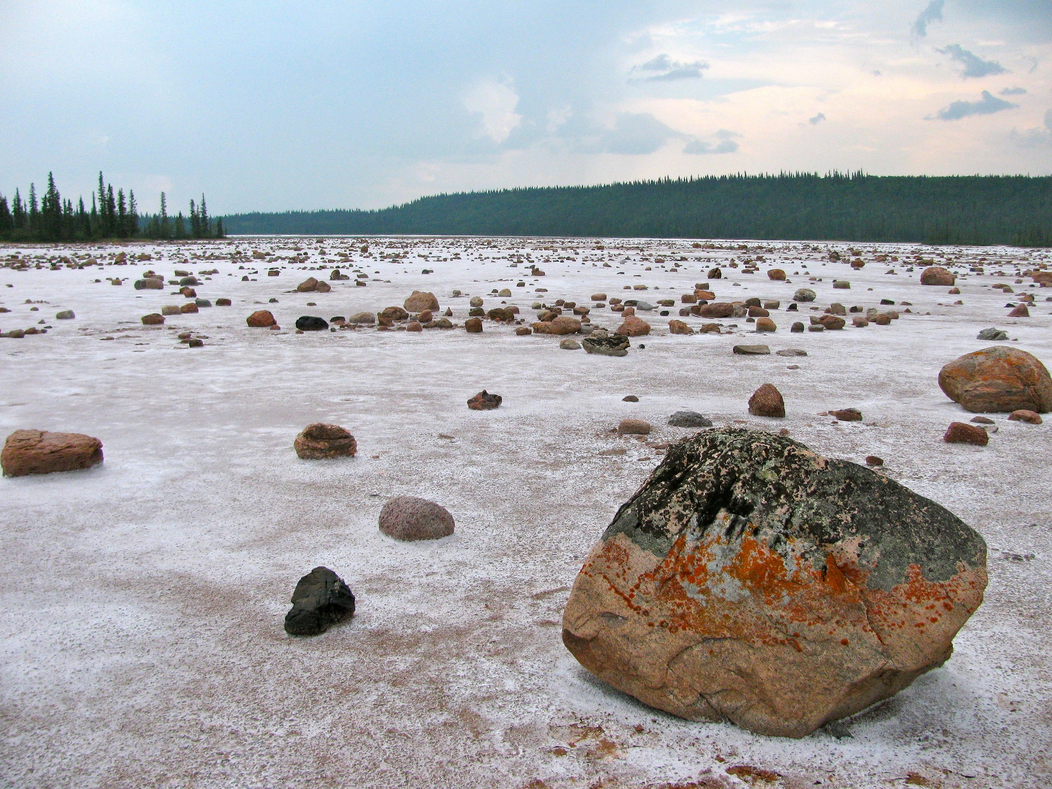 Salt-Plain-Wood-Buffalo.jpg