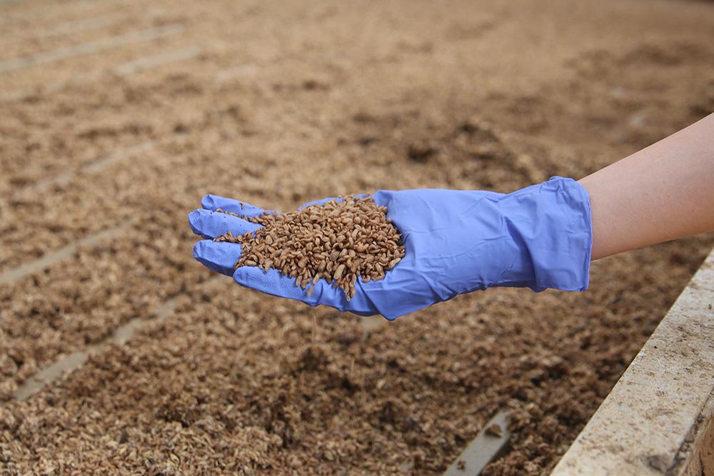 We Took a Little Field Trip to a BC Farm Raising Millions of Maggots