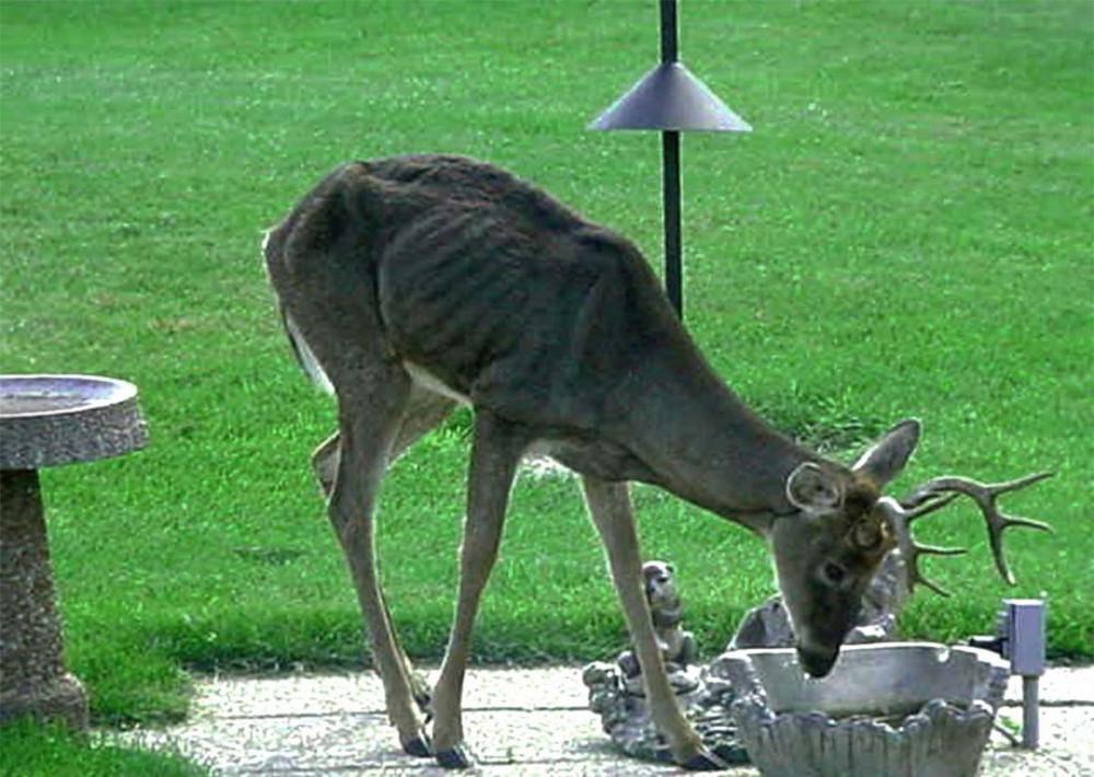Growing Risk Diseased Deer Meat Is Ending Up on Canadians' Tables, Critics Warn