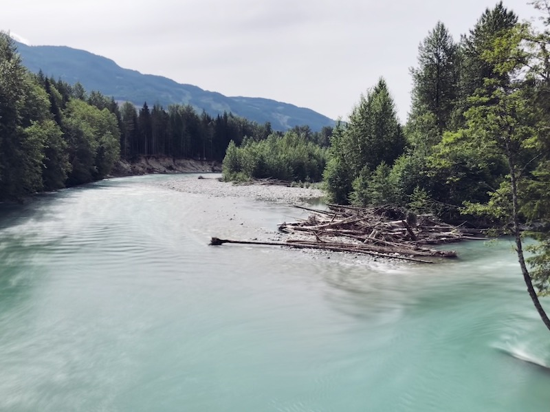 'It's All Driven by Salmon:' The Push to Protect the Pitt River