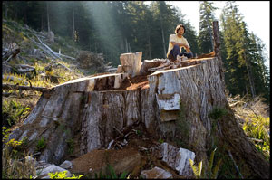 Ken Wu on a stump