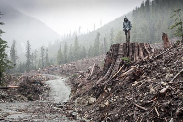 582px version of Clearcut on Vancouver Island
