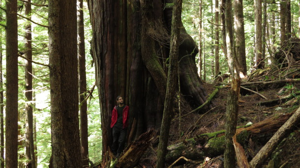Walbran Valley old growth