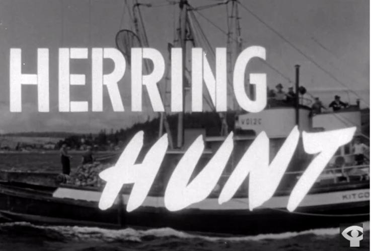 Herring-Hunt-3.jpg