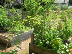 Garden (Mole Hill)